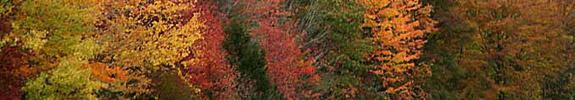 blue ridge in the fall madison virginia